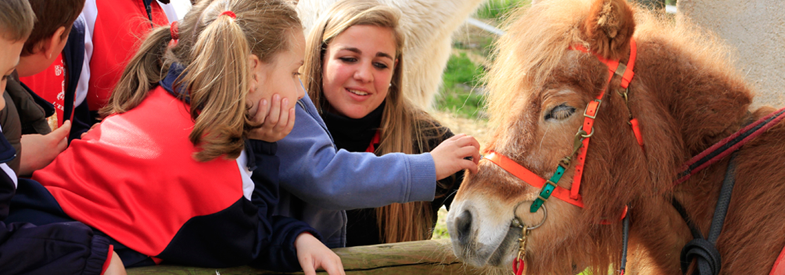 granja_escola__cavall_seva_hipica_classe_cavall